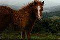 viande chevaline de race comtoise