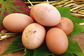 Oeufs frais des poules de la ferme