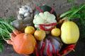 paniers de fruits et légumes de pleine terre BIO