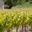 Les vignerons de Valléon