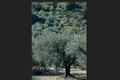 """Huile D'olive  """" La Tanche """""""