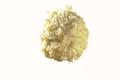 Chardon Armagnac
