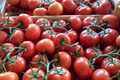 Tomate En Grappe
