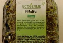 Graine Germées - Alfafa