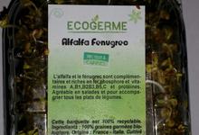 Graine Germées - Alfafa et fenugrec