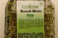 Graine Germées - Alfafa et Brocoli