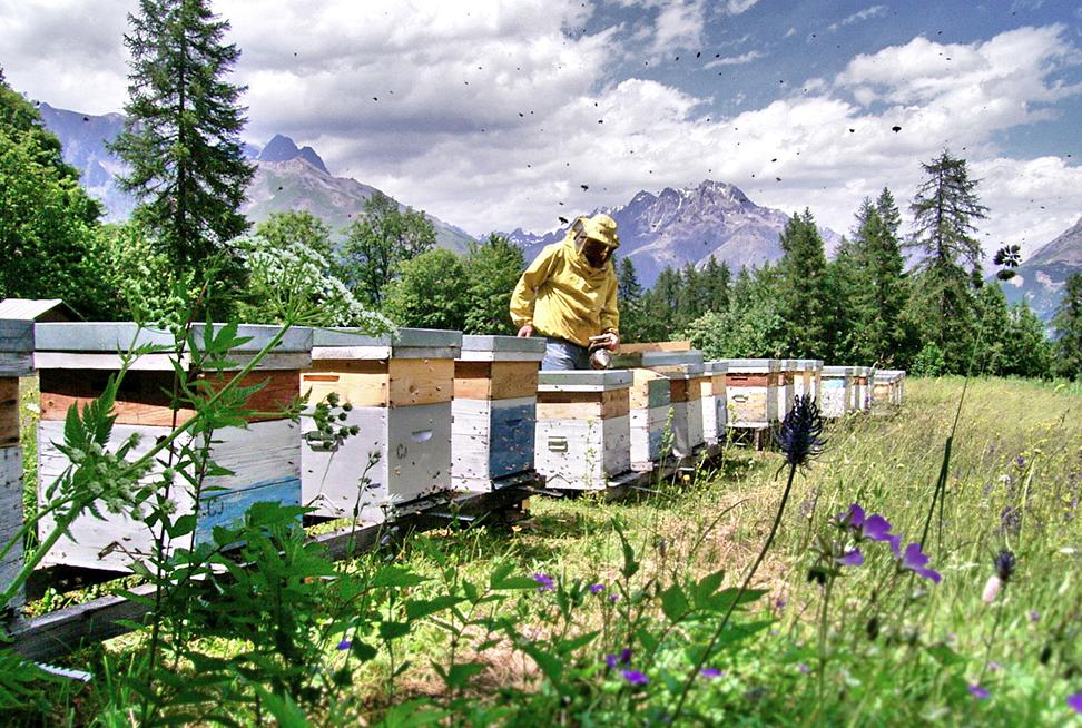 la maison du miel producteur hautes alpes