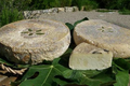 la Pastourelle : brebis / chèvre croûte lavée