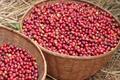 Café BURUNDI - Station Nzove - Terroir NGOZI - 100% bourbon rouge