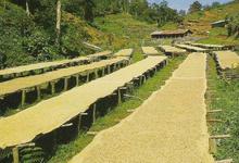 Café KENYA - Kiambu Terroir - MAASAI