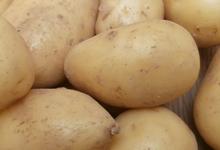 """Pomme de terre """"ferme"""" Charlotte, Bernard DELAGOUTTE"""