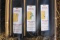 Panier gourmand 3 huiles vierges (lin, chanvre, caméline)