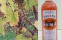 domaine de Burgué-Séré, Vin de Pays Rosé