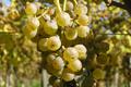 domaine Latapy, jus de raisin