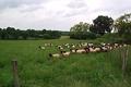 agneaux fermiers,  EARL Chez Bourlot