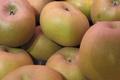 les jardins de la Frolle, Pomme Canada grise