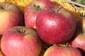 les jardins de la Frolle,  Pomme Pilot