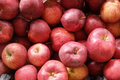 les jardins de la Frolle,  Pomme Pinova