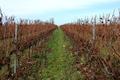 domaine des vignes hautes