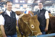COIFFARD DAVID, viande bovine