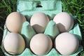 Oeufs fermiers de poules Gélines de Touraine