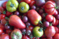 Colis Tomates