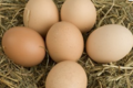 œufs fermiers