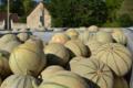 Melon Charentais IGP du Haut Poitou
