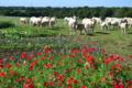 La ferme de Botfaven
