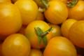 Les Serres de Pont-Odet, tomate cerise
