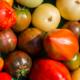 Tomates du gaec Bocel