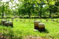 Miellerie des vallons de Vilaine, miel de foret