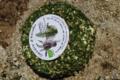 Chèvrerie de Keraden, fromage de chèvre ail et fine herbes