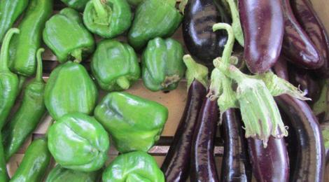 le jardin d'André, aubergines