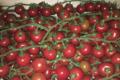 Le Potager De Kergistalen , tomates cerise