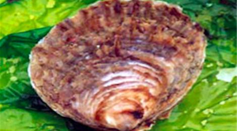 huîtres plates