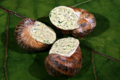 les escargots du Perche, escargots au beurre persillé