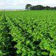 Vente à la ferme de légumes secs