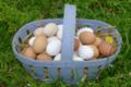 Ferme Saint-Désiré, des bons œufs frais