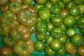 Ferme Saint-Désiré, tomates
