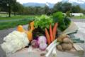 les jardins du Taillefer, panier de légumes bio