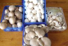 la maison du champignon, Claire Duc