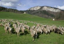 bergerie de Saint Pierre