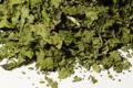 La Belle Verte,  Coriandre