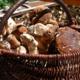 Les Oréades des Bauges, cêpes