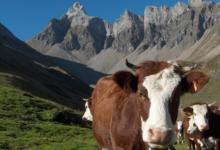 GAEC Le Fresnay - Alpage de Doran