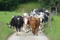 L'auberge Des Vaches