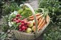 Paniers bio de légume