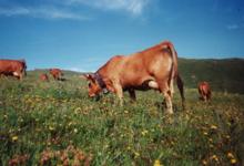 abbatoir de viande Tarentaise