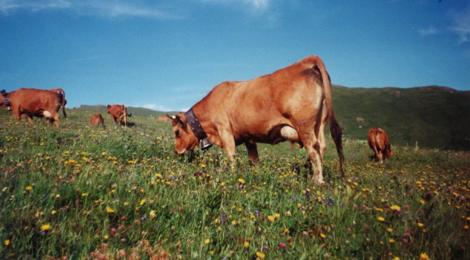 viande des vallées de Tarentaise